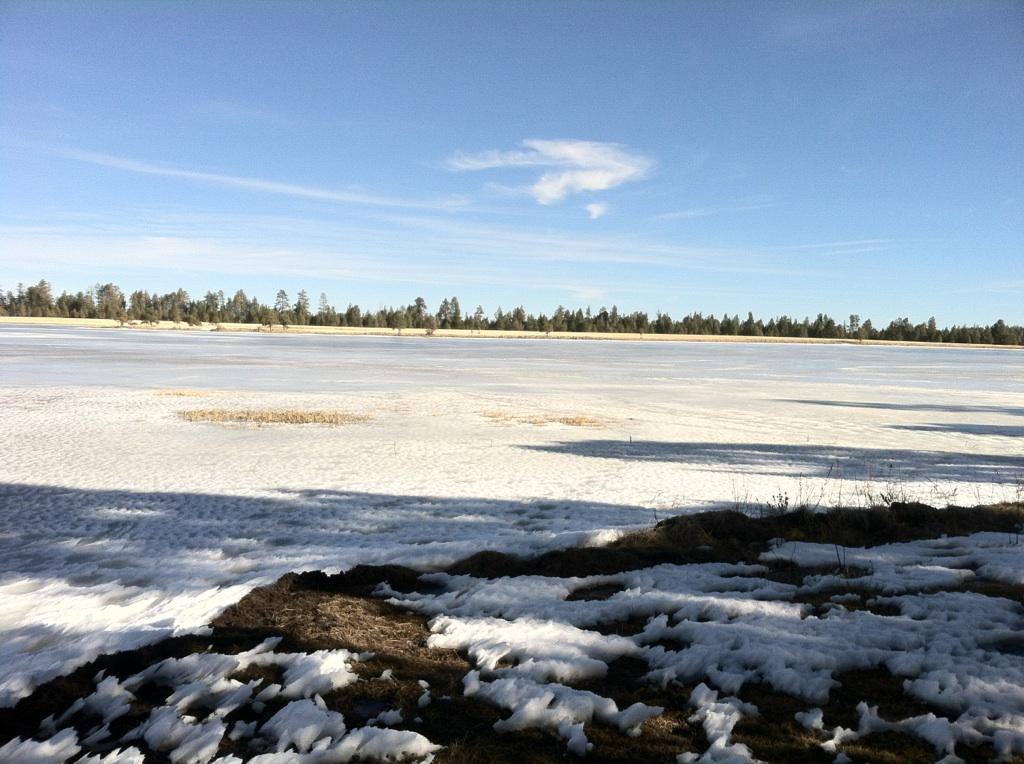 The arizona fly fishing wall search results rainbows for Big lake az fishing report