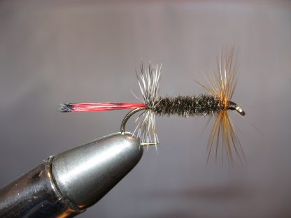 Image of AZ Peacock Lady/Red Tail Size 10