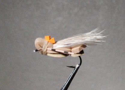 Image of Cicada Tan